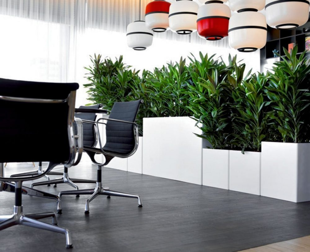 Arredamento per ufficio verde da interno - Pianta da ufficio ...
